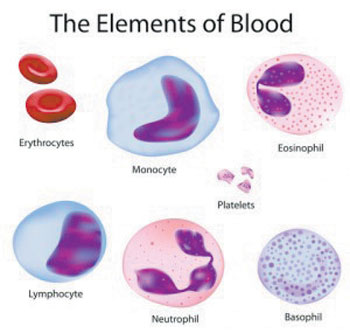 05 03 Blood Elements graphic