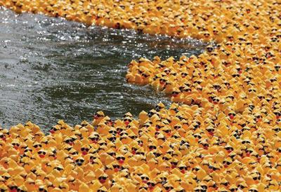 04-18-12-ducks-swimming.jpg